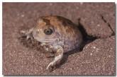 004-trilling-frog-xx-788-copy