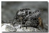 01-fly-and-beetle-orgie-lg-447
