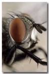 018-flesh-fly-1-hw-212-