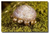 020-big-snail-amplirhegada-sp-zo-138