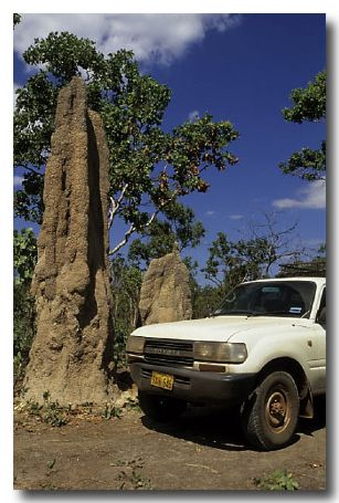Spinifex Termites – mound
