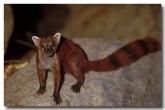 49-mongoose-xh-310-copy