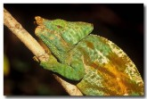 79-chameleon-xh-704-copy