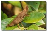 82-chameleon-mz-734-copy