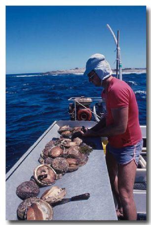 (KO-315) Shell Fishery – Abalone