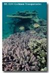abrolhos-island-he-323-copy