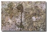 austroaeschna-eungella-mc-leod-river-llg-533-web-copy