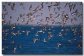 bird-biodiversity-xk-167-copy