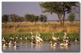 birds-biodiversity-pc-379-copy