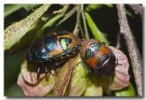 bug-kent-river-llf-722-web-copy