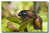 bug-kent-river-llf-725-web-copy