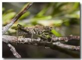 bug-reduviidae-lake-cronin-aad-516-web-copy