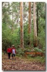 bushwalking-eb-186-copy