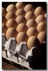 chicken-ea-153-copy