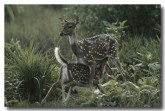 chital-qe-168-web-copy