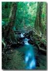 daintree-woobadda-creek-tc-234-copy