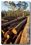 deforestation-native-tb-962-copy