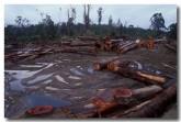 deforestation-tc-035-copy