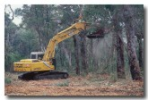 deforestation-tc-125-copy