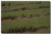 deforestation-za-744-copy