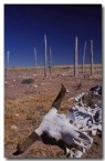 drought-cb-050-copy