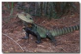 eastern-water-dragon-xn-761-copy