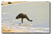 emu-llf-929-web-lochman-transparencies-copy