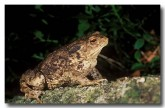 eur-toad-zk-576-copy