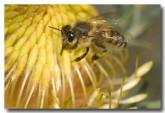 feral-bee-aad-620-web-copy