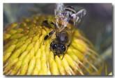 feral-bee-aad-621-web-copy