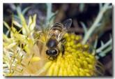 feral-bee-llf-916-web-copy