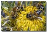 feral-bee-llf-919-web-copy