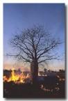 fire-jk-301-copy