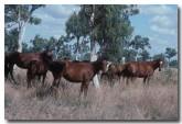 horses-sa-573-copy