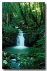 lamington-toolona-creek-aw-816-copy