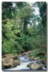 lamington-toolona-creek-px-389-copy