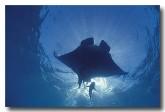 manta-ray-cl-839-copy