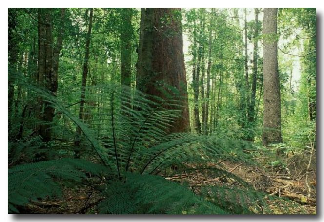 Australian Landscapes / Tasmania / Lyrebird Nature Walk