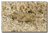 orthoptera-grasshopper-expedition-range-llh-136-web-copy