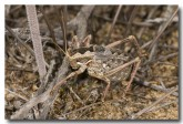 orthoptera-tettigoniidae-5-stockyard-gully-llh-162-web-copy