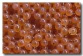 rainbow-trout-eggs-zp-920-copy