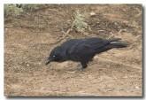 raven-lld-939
