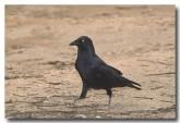 raven-lld-940