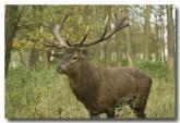 red-deer-lld-836-copy
