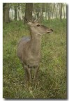 red-deer-lld-841-copy