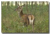 red-deer-lld-843-copy