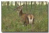 red-deer-lld-843-copy