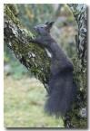red-squirrel-lld-883-copy
