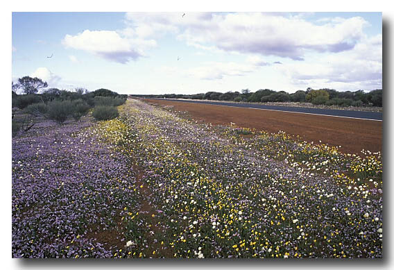 (AC-380) Road verge with flowering annuals
