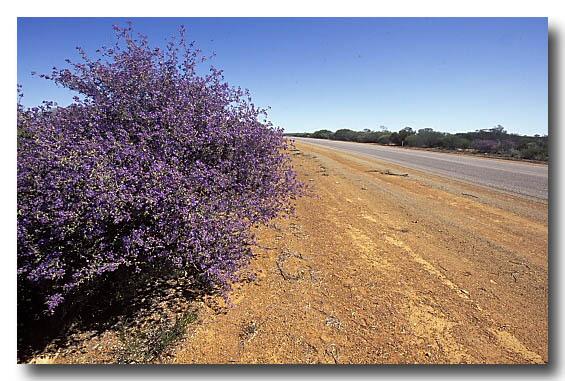 (AF-894) Road verge with flowering plants